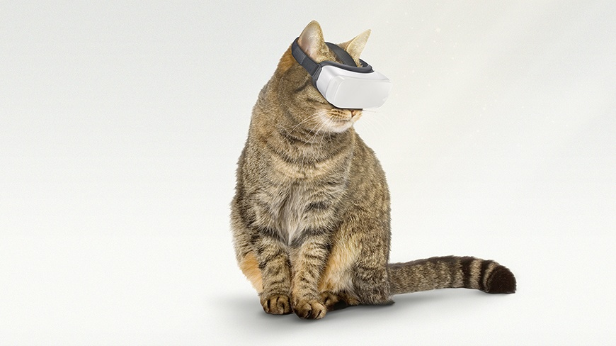 Isobar's Cat VR powers game changing content for Australian Zoos